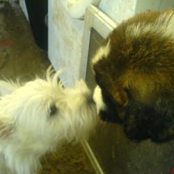 Lost dog on 25 Nov 2009 in Shanagarry/Ladysbridge Area. Beautiful White Minature Westhighland Male, Very Friendly And Very Playful My Children Are Absolutely Brokenhearted Reward For Safe Return Please Contact 0863275024