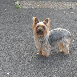 Reunited dog 04 Jan 2010 in Deansrath, Clondalkin. Thanks to everyone who said they saw her. An especially big thank you to Kate whos kids had taken her in after seeing our dog nearly frozen in a field near them. We are blessed our dog was taken in by such warm loving people. Miracles do happen.