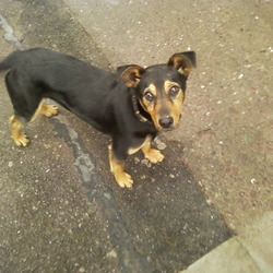 Found dog on 03 Mar 2010 in co.cork. 10-12 week old pup