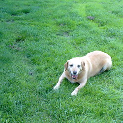 Dog looking for home 01 Aug 2010 in Trim, Co. Meath. Jade is a 5 year old X lab seeking a new home due to her family moving away. She is an indoors dog,housetrained, spayed. Will make a great companion and is very good with children. Email sineadwxox@gmail.com