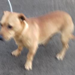 Dog looking for home 01 Nov 2017 in dublin_pound. surrendered, contact dublin dog pound... Surrendered Date: