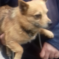 Dog looking for home 03 May 2019 in dublin_b. surrender now in the dublin dog pound...Location Found: