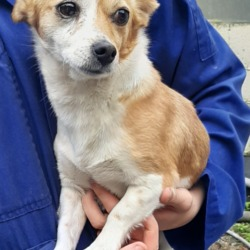Dog looking for home 03 Oct 2019 in dublin. surrender needs a home, contact dublin dog pound...Date Found: