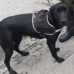 Dog looking for home 03 Oct 2019 in dublin_pound. surrender, needs a new home, contact dublin dog pound...Date Found: