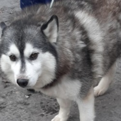 Dog looking for home 04 Nov 2019 in dublin. surrender needs a home, contact the dublin dog pound..Date Found: