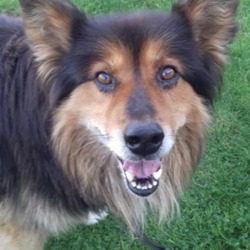 Dog looking for home 04 Sep 2018 in meath.../. needs a home...Meath Dog Shelter