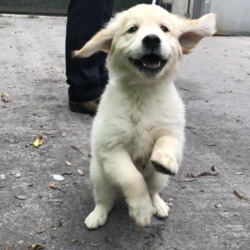 Dog looking for home 04 Sep 2019 in Tallaght... surrender needs a home, contact dublin dog pound...Date Found: