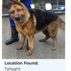Dog looking for home 06 Apr 2018 in dublin_pound.... SURRENDERED needs a home, contact dublin dog pound...Location Found: Tallaght Surrendered Date: 04/04/2018
