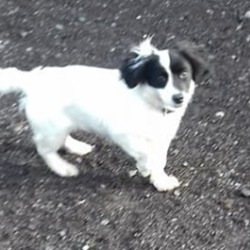 Dog looking for home 06 Feb 2019 in dogs in distress. surrender...Meath Dog Shelter