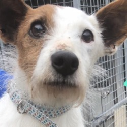 Dog looking for home 08 May 2019 in dublon_f. surrender in the dublin dog pound,