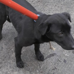 Dog looking for home 10 Jan 2020 in dublin.. surrender, needs a home,,Date Found: