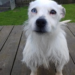 Dog looking for home 13 Jun 2019 in meath_pound. surrender...Meath Dog Shelter 52 mins ·  Ref 167 Baby was surrendered today with her little pal Maisie, this cute little ball of fluff is so friendly. She was house trained but has been living outside, she will be 3 years old in august. If you can offer one or both of these girls a home contact the shelter on 0870973911 or pm the page