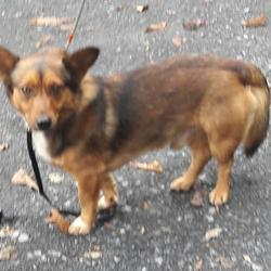 Dog looking for home 13 Sep 2017 in dublin_. surrendered contact dublin dog pound... Surrendered Date: