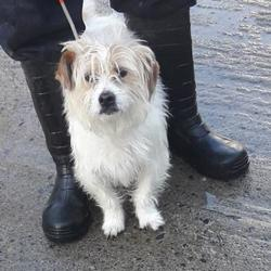 Dog looking for home 14 Feb 2018 in dublin.. surrendered needs a home, contact dublin dog pound.. Surrendered Date: Monday, February 12, 2018
