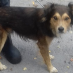 Dog looking for home 14 Sep 2018 in dublin...c. surrendered needs a home, contact dublin dog pound...Date Found: