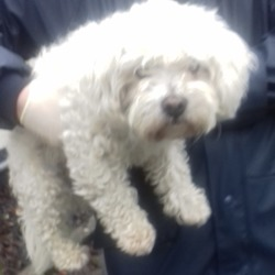 Dog looking for home 16 Nov 2018 in dublin..... surrendered needs a home, contact dublin dog pound...Date Found: