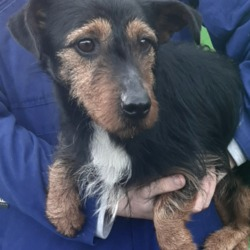 Dog looking for home 17 Jan 2020 in dublin. surrender contact dublin dog ppound...Date Found: