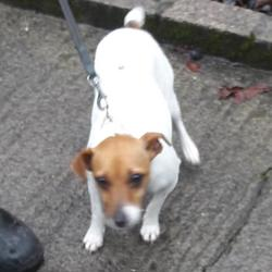 Dog looking for home 17 Nov 2017 in dublin_pound.. surrendered, contact dublin dog pound.. Surrendered Date: