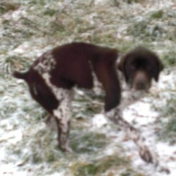 Reunited dog 18 Feb 2010 in Galway, Ireland. Ingrid has found a good home!