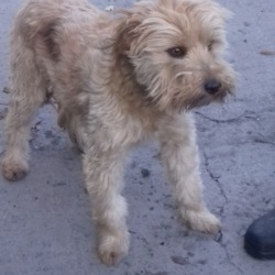 Dog looking for home 19 Oct 2018 in dublin... surrendered needs a home, contact dublin dog pound...Date Found: 18/10/2018