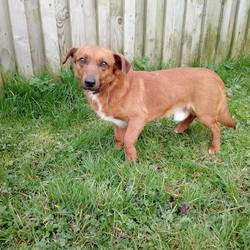 Dog looking for home 20 Apr 2018 in meath. surrendered needs a home, contact dublin dog pound.. Toby, surrendered today through no fault of his own, if you can help this chap contact us on 0870973911
