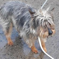 Dog looking for home 20 Feb 2018 in dublin. surrendered...surrendered Date: Monday, February 19, 2018  contact dublin dog pound