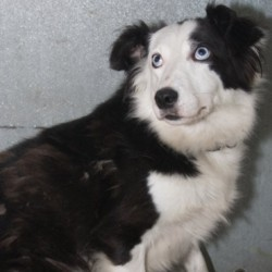Reunited dog 20 Nov 2009 in Galway, Ireland. Has found a home!
