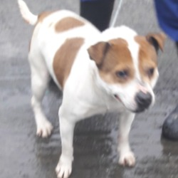 Dog looking for home 22 Jan 2019 in dublin a. surrendered needs a home, contact dublin dog pound...21/01/2019