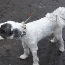 Dog looking for home 22 Jan 2019 in dublin x. surrendered needs a home , contact dublin dog pound...21/01/2019