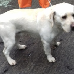 Dog looking for home 22 Jan 2019 in dublin x. surrendered needs a home, contact dublin pound..21/01/2019