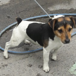 Dog looking for home 22 Jul 2018 in dublin../. surrendered needs a home contact dublin dog pound...Date Found: