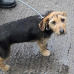 Dog looking for home 22 Sep 2017 in dublin_pound_b. surrendered needs a home, contact dublin dog pound... Surrendered Date: