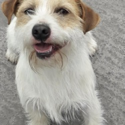 Dog looking for home 23 May 2019 in dublin. surrendered contact dublin dog pound...Date Found: 23/05/2019