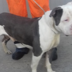 Dog looking for home 25 Feb 2019 in dublin. surrendered needs a home, contact dublin dog pound...Date Found: