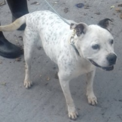 Dog looking for home 25 Sep 2018 in dublin...z. surrendered needs a home, contact dublin dog pound...
