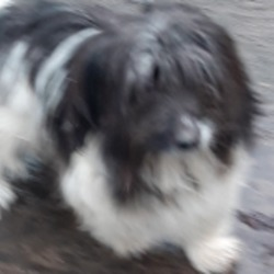 Dog looking for home 26 Nov 2019 in dublin.. surrender needs a home , contact dublin dog pound..Date Found: