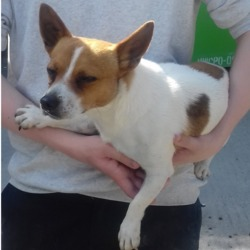 Dog looking for home 27 Jun 2018 in dublin:::. surrendered needs a home, contact dublin dog pound...Date Found: