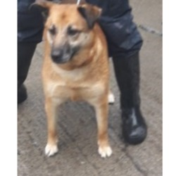 Dog looking for home 27 Mar 2018 in dublin_pound....`. surrendered needs a home, contact dublin dog pound..Surrendered Date: 26/03/2018