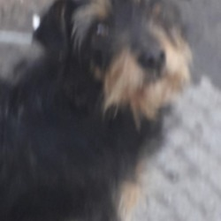 Dog looking for home 28 Feb 2020 in dublin... surrender needs a home, contact dublin dog pound...Date Found: 27/02/2020