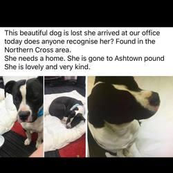 Found dog on 01 Dec 2017 in dublin_pound/. found...now in the dublin dog pound..