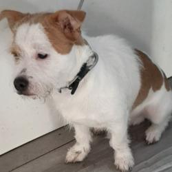 Found dog on 01 Dec 2020 in Tallaght. found, now in the dublin dog pound...Date Found: 27/11/2020 Location Found: Tallaght