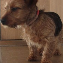 Found dog on 01 Feb 2018 in Ashford area.. found..is a male terrier found in Ashford area. Please contact Wicklow Dog Pound for further information at 0404-44873