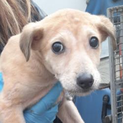 Found dog on 01 Jan 2021 in Tallaght Kiltipper. found, now in the dublin dog pound,...Date Found: 31/12/2020 Location Found: Tallaght Kiltipper