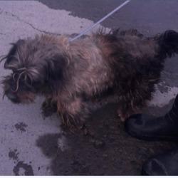 Found dog on 01 May 2018 in Melrose Est,.... found,now in the dublin dog pound...Date Found: 30/04/2018 Location Found: Melrose Est,