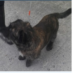 Found dog on 01 May 2018 in Melrose Est,. found,now in the dublin dog pound...Date Found: 30/04/2018 Location Found: Melrose Est,
