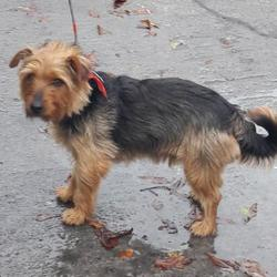 Reunited dog 01 Nov 2017 in Kingswood , Tallaght... UPDATE OWNER FOUND...found, now in the dublin dog pound... Date Found: Tuesday, October 31, 2017 Location Found: Kingswood , Tallaght