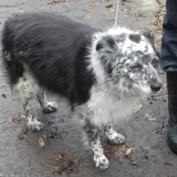 Found dog on 01 Nov 2018 in Whitechurch Estate. found, now in the dublin dog pound...Date Found: 31/10/2018 Location Found: Whitechurch Estate