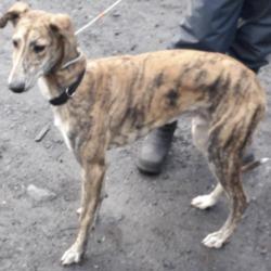 Found dog on 02 Dec 2019 in Ballyowen Lane. found, now in the dublin dog pound...Date Found: 01/12/2019 Location Found: Ballyowen Lane