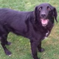 Reunited dog 02 Jan 2019 in knightsbrook i. UPDATE REUNITED....found...Meath Dog Shelter Just now ·  Ref 2 and 3, picked up in knightsbrook in trim, any information please contact us on 0870973911