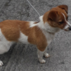 Found dog on 02 Jul 2020 in clondalkin. found...now in the dublin dog pound...Date Found: